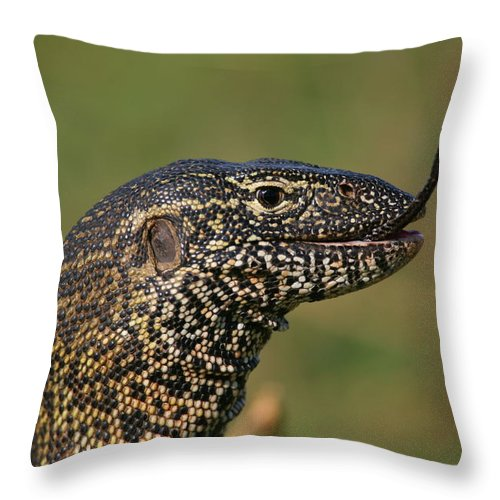 Monitor Throw Pillow featuring the photograph Scales For Breakfast by Bruce J Robinson