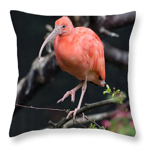 Scarlet Ibis Throw Pillow featuring the photograph Scarlet Ibis by Greg Nyquist