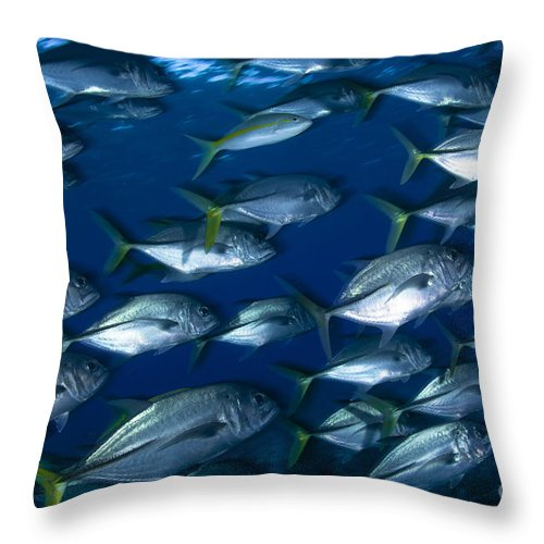 Osteichthyes Throw Pillow featuring the photograph School Of Jacks In Motion, Belize by Todd Winner