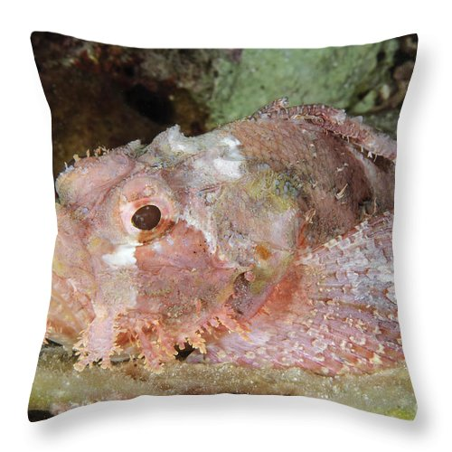 Ocean Throw Pillow featuring the photograph Scorpionfish, Indonesia by Todd Winner