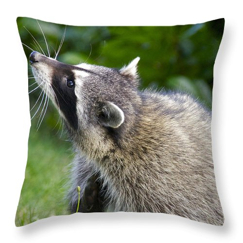 Photography Throw Pillow featuring the photograph Scratching The Itch by Sean Griffin