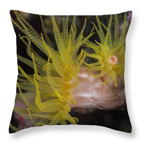 Raja Ampat Throw Pillow featuring the photograph Sea Cups In Raja Ampat, Indonesia by Todd Winner