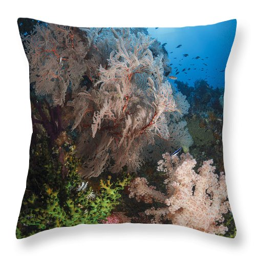Raja Ampat Throw Pillow featuring the photograph Sea Fan On Soft Coral In Raja Ampat by Todd Winner