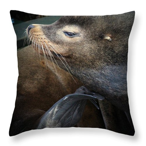 Seal Throw Pillow featuring the photograph Sea Lion by Steve McKinzie