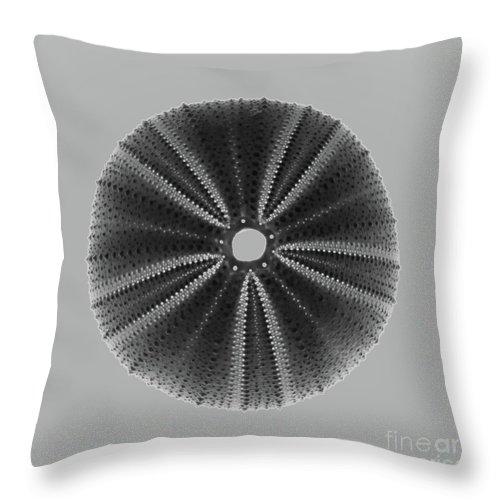 Shell Throw Pillow featuring the photograph Sea Urchin 1 by Susan Cliett
