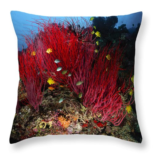 Fish Throw Pillow featuring the photograph Sea Whips And Soft Coral, Fiji by Todd Winner