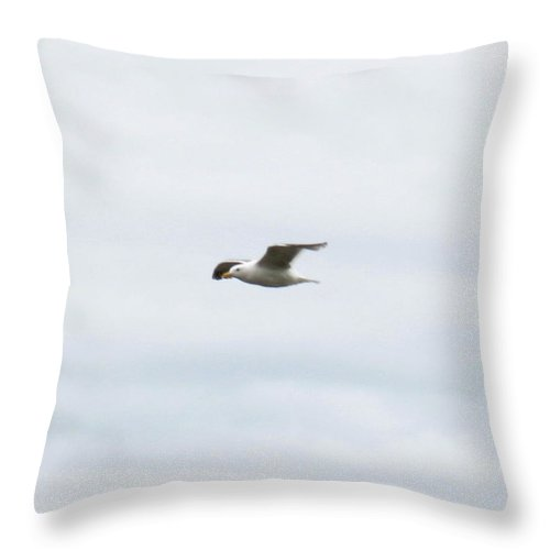 Seagull Throw Pillow featuring the photograph Seagull II by Linda Hutchins