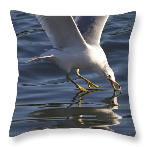 Seagull Throw Pillow featuring the photograph Seagull On Water by Dustin K Ryan