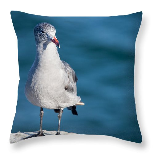 Gull Throw Pillow featuring the photograph Seagull by Ralf Kaiser