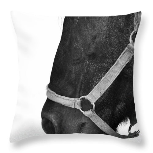 Horse Throw Pillow featuring the photograph Secrets And Whispers by Traci Cottingham