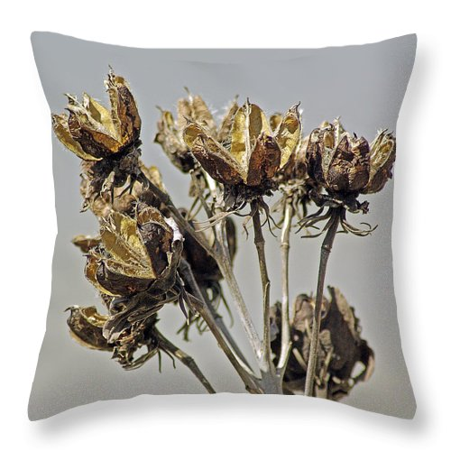 2d Throw Pillow featuring the photograph Seed Pods by Brian Wallace