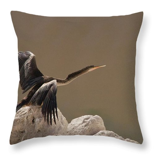 Anhinga Throw Pillow featuring the photograph Seen Gone by Joseph Yarbrough