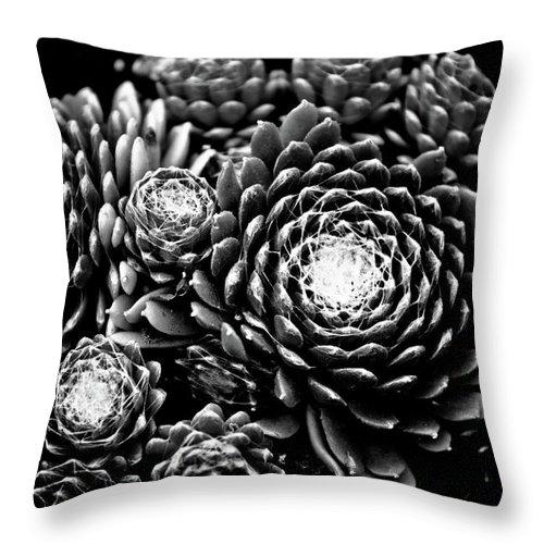 Art Throw Pillow featuring the photograph Sempervivum by Hakon Soreide