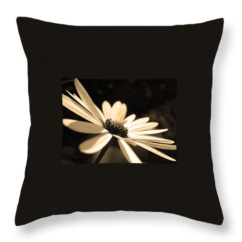 Flowers Throw Pillow featuring the photograph Sepia Daisy Flower by Sumit Mehndiratta