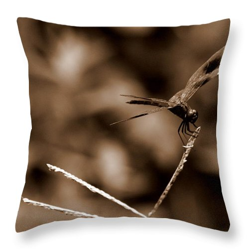 Dragonfly Throw Pillow featuring the photograph Sepia Dragonfly by Jacob Klaus