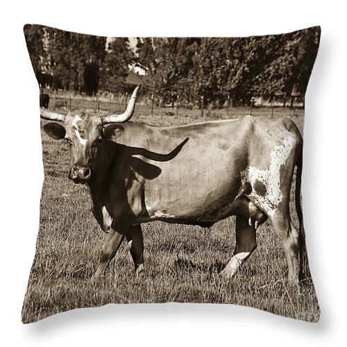 Sepia Throw Pillow featuring the photograph Sepia Longhorn Cow by Jim And Emily Bush