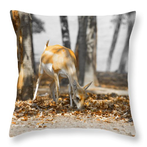 Grazing Impala Throw Pillow featuring the photograph Shaded Grazing by Douglas Barnard