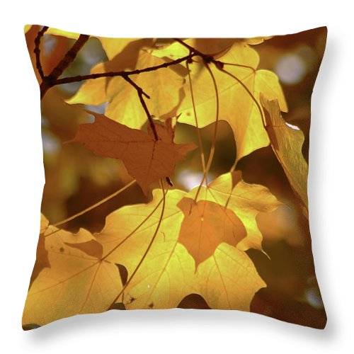 Fall Leaves Throw Pillow featuring the photograph Shadow Dancing Leaves by Michael Flood