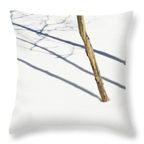 Color Image Throw Pillow featuring the photograph Shadow Of Small Trees On The Snow New by David DuChemin
