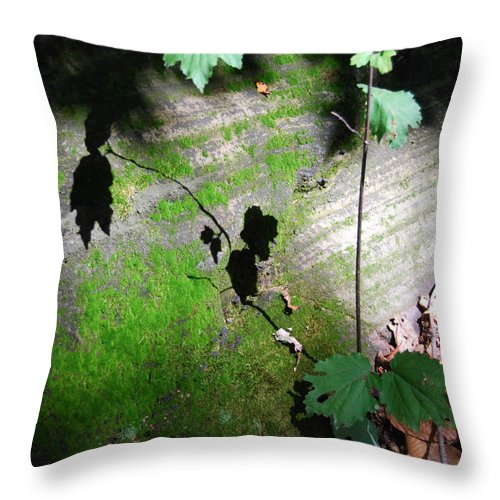 Moss Throw Pillow featuring the photograph Shadow Play by Trish Hale