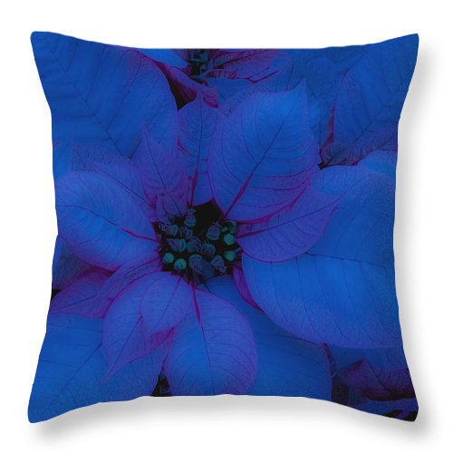 Greeting Card Throw Pillow featuring the photograph Sharing The Joys Of Christmas by DigiArt Diaries by Vicky B Fuller