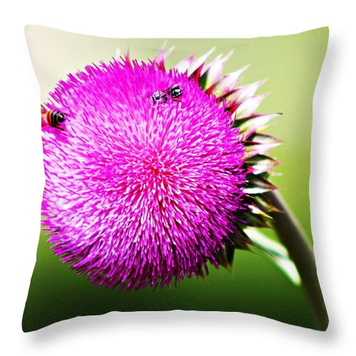 Bee Throw Pillow featuring the photograph Sharp But Sweet by Monica Wheelus