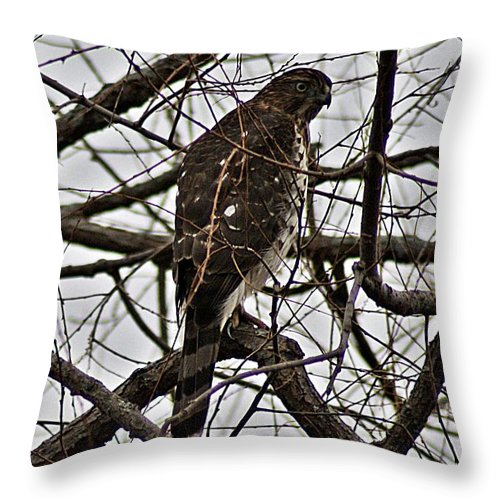 Sharp Throw Pillow featuring the photograph Sharp Shinned Hawk by Joe Faherty