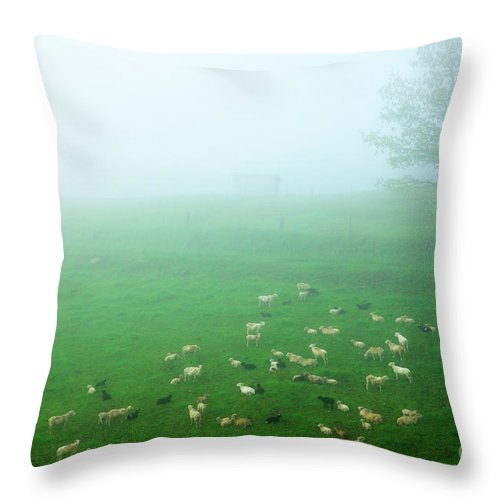Fog Throw Pillow featuring the photograph Sheep In Fog by Thomas R Fletcher