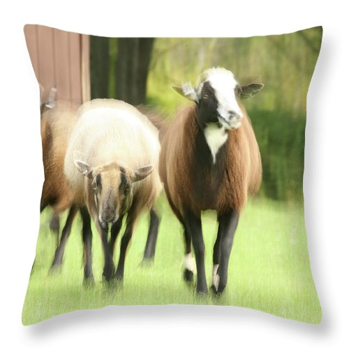Sheep Throw Pillow featuring the photograph Sheep On The Run by Karol Livote