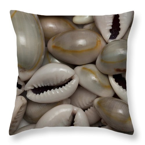 Sea Throw Pillow featuring the photograph Shell Sigay 1 by John Brueske