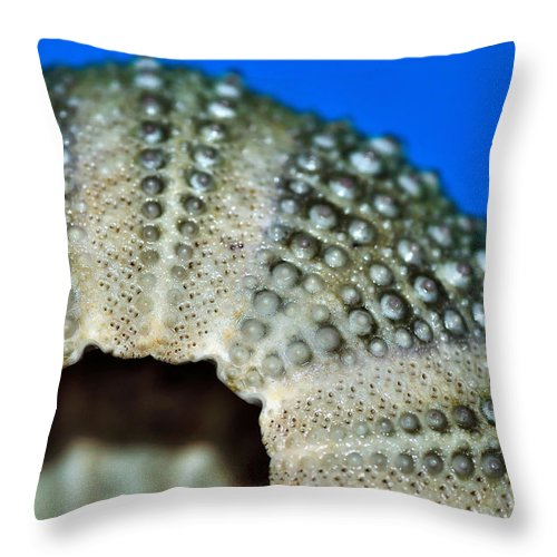 Photography Throw Pillow featuring the photograph Shell With Pimples 2 by Kaye Menner