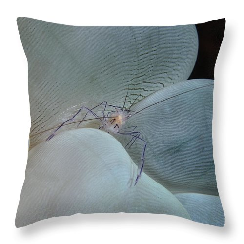 Ocean Throw Pillow featuring the photograph Shrimp On Bubble Coral, Indonesia by Todd Winner