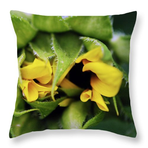 Sunflower Throw Pillow featuring the photograph Shy by Lori Tambakis