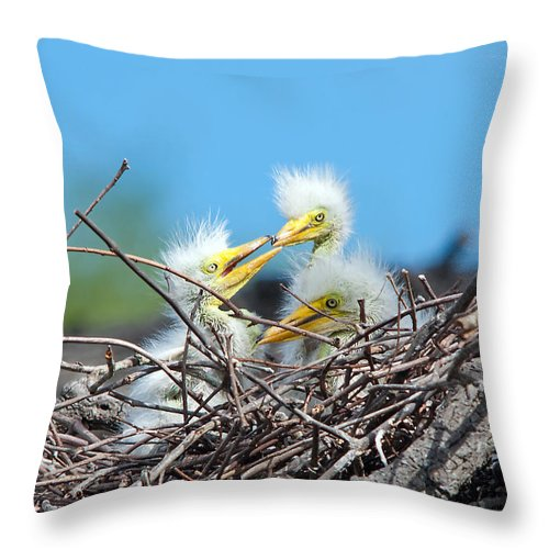 Wildlife Throw Pillow featuring the photograph Sibling Rivalry by Kenneth Albin