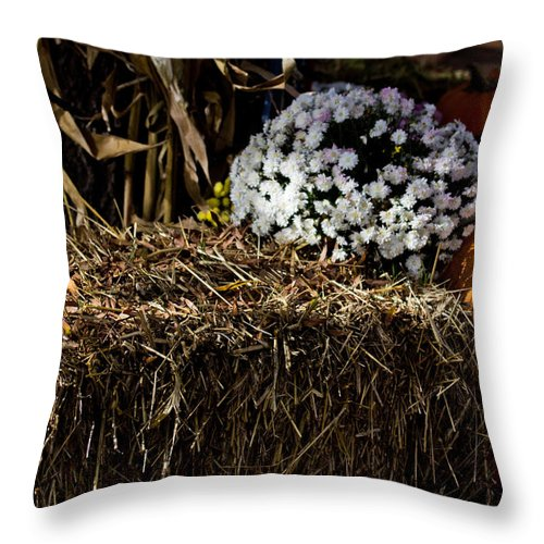 Fall Throw Pillow featuring the photograph Sign's Of Fall by Tom Gari Gallery-Three-Photography