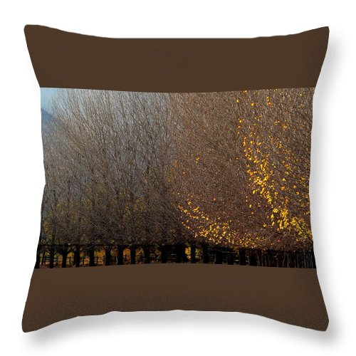 Bare Throw Pillow featuring the photograph Silent Sentinels by Jeff Lowe
