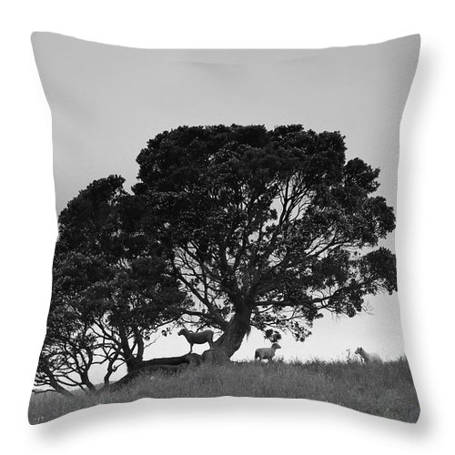 Animal Throw Pillow featuring the photograph Silhouette Of A Tree With Sheep by David DuChemin
