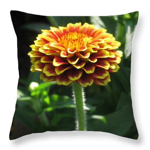 Throw Pillow featuring the photograph Simple But Beautiful by Clarella Thomas