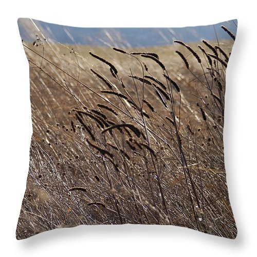 Weeds Grass Wild Growth Natural Ornaments Light Brush Glow Evening Creation Throw Pillow featuring the photograph Simply Beautiful by Vilas Malankar
