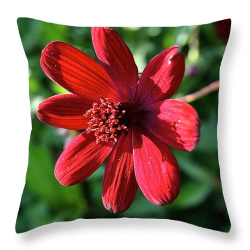 Outdoors Throw Pillow featuring the photograph Simply Ruby by Susan Herber