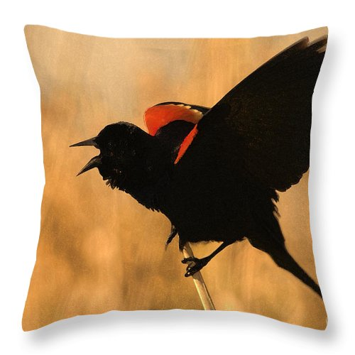Red-winged Blackbird Throw Pillow featuring the photograph Singing At Sunset by Betty LaRue