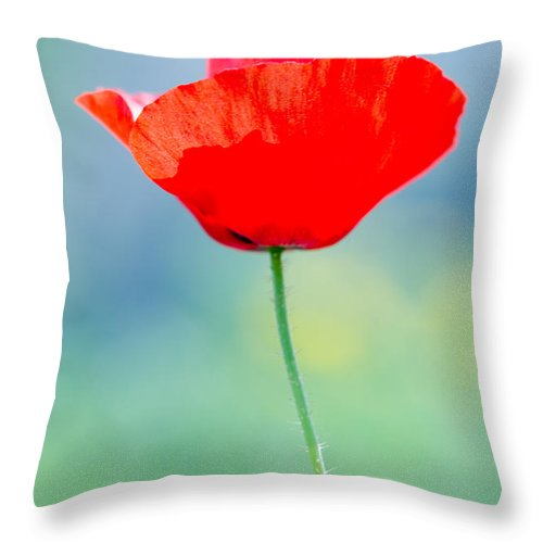 Background Throw Pillow featuring the photograph Single Poppy by Michael Goyberg