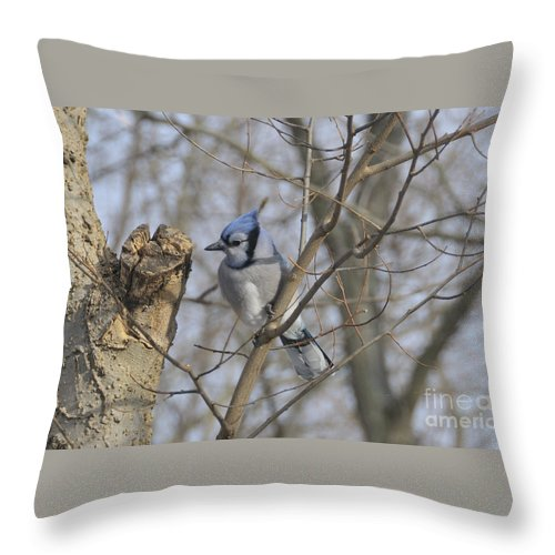 Blue Jay Throw Pillow featuring the photograph Sitting Pretty by David Arment