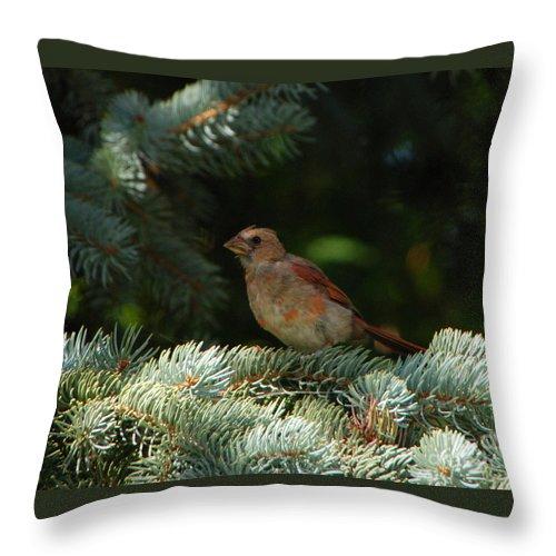 Bird Throw Pillow featuring the photograph Sitting Pretty by Grace Grogan