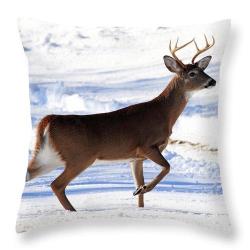 Buck Throw Pillow featuring the photograph Six Point Buck by Lloyd Alexander
