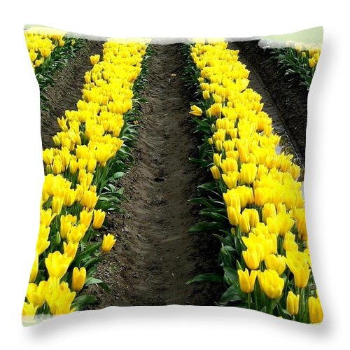 Tulips Throw Pillow featuring the photograph Skagit Valley Tulips 2 by Will Borden