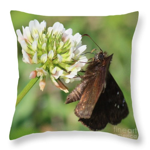 Nature Throw Pillow featuring the photograph Skipper On Clover Square by Carol Groenen