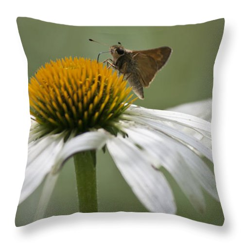 Coneflower Throw Pillow featuring the photograph Skipper by Teresa Mucha