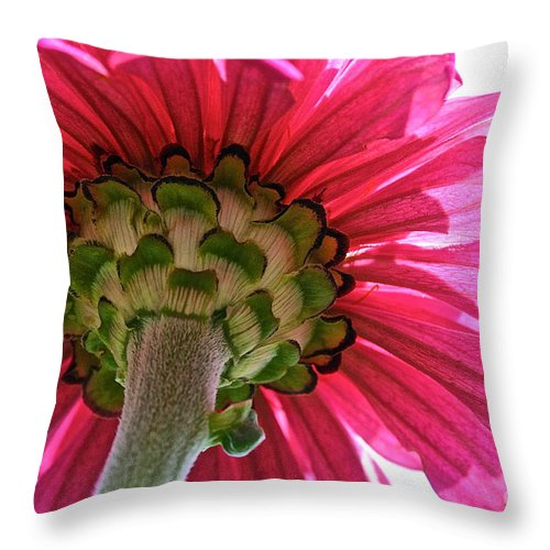 Plant Throw Pillow featuring the photograph Sky Petals by Susan Herber