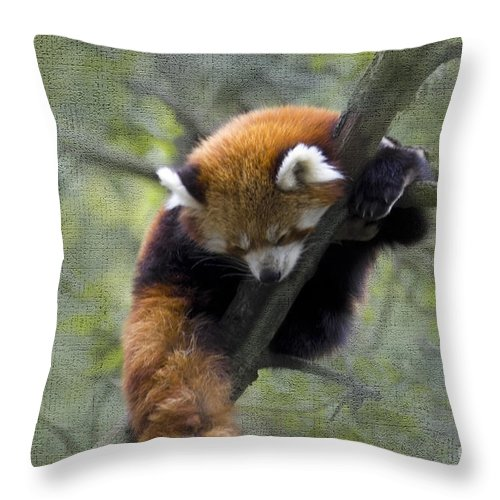 Nature Throw Pillow featuring the photograph sleeping Small Panda by Heiko Koehrer-Wagner